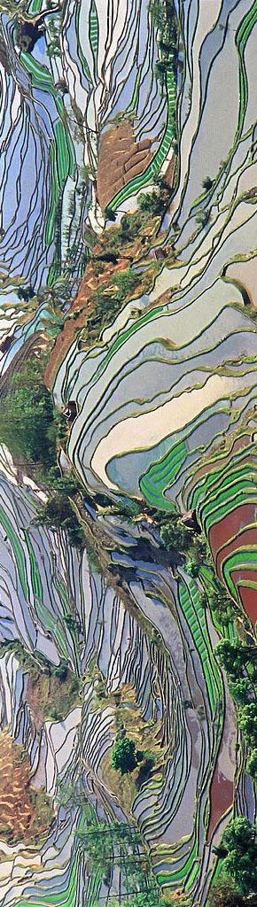 Terraced Fields in Yunan, China